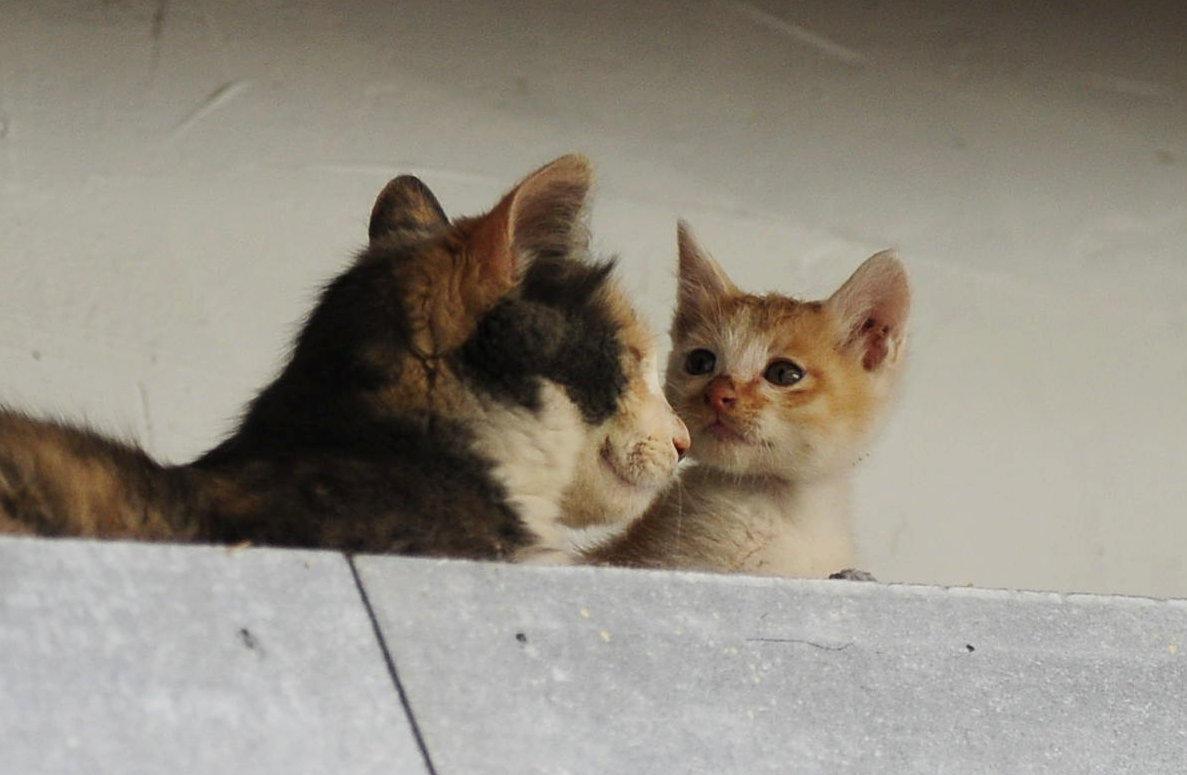 丽江有故事:有一种动物亲情 叫感动!