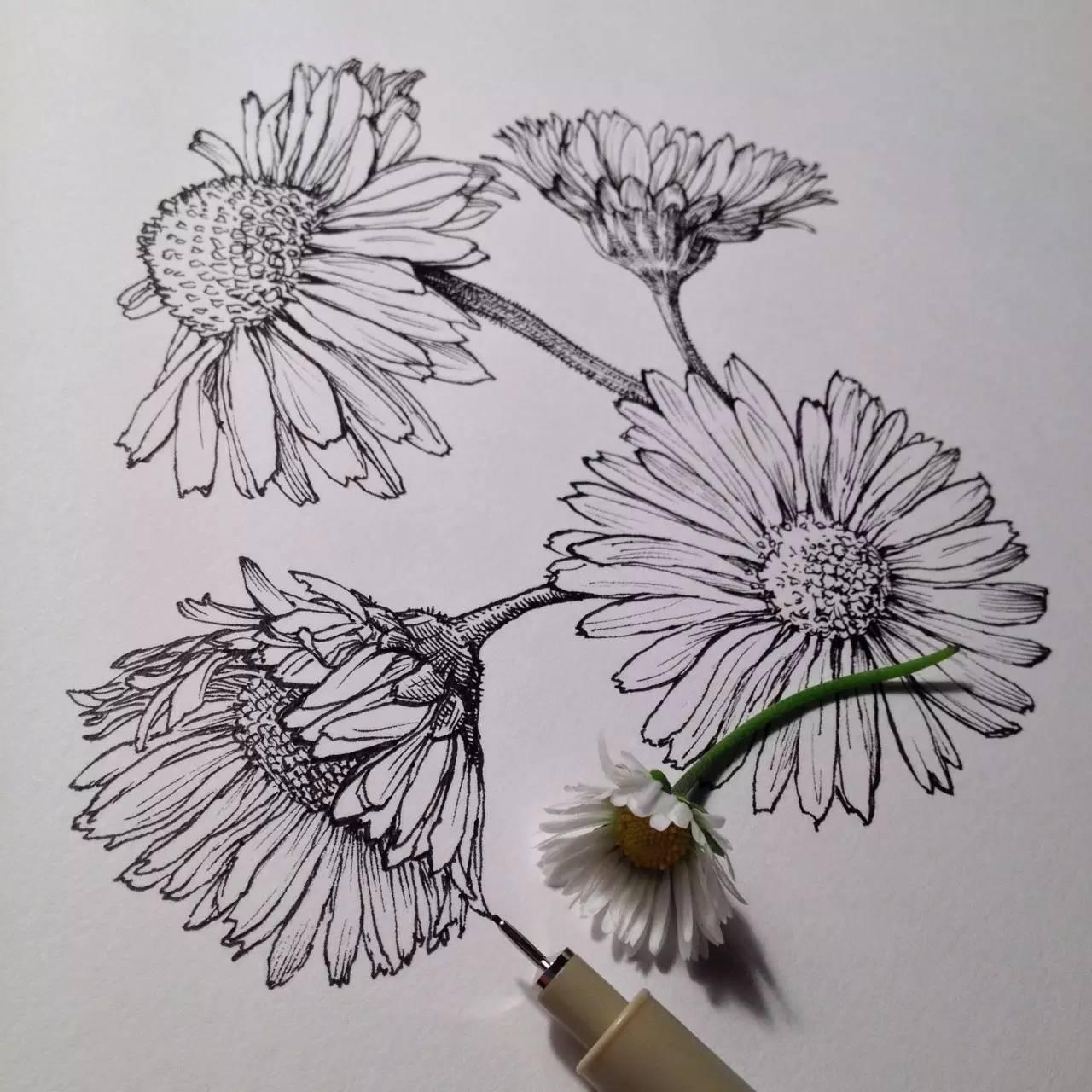花卉有各种画法,可是要怎样才可以画得美美的?图片