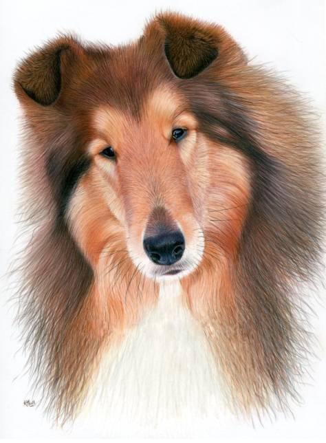 heather lara的彩铅写实作品 英国画家他笔下的彩铅动物 细腻