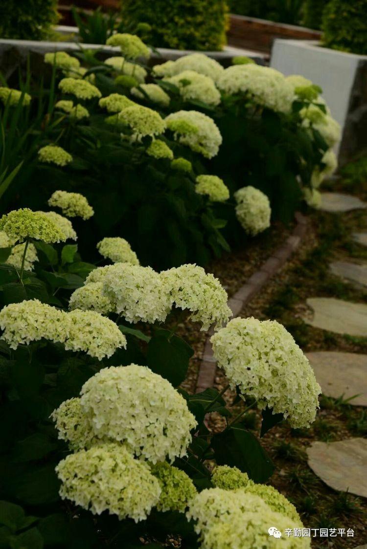 园丁奖花园组《018号》严家小院的春天