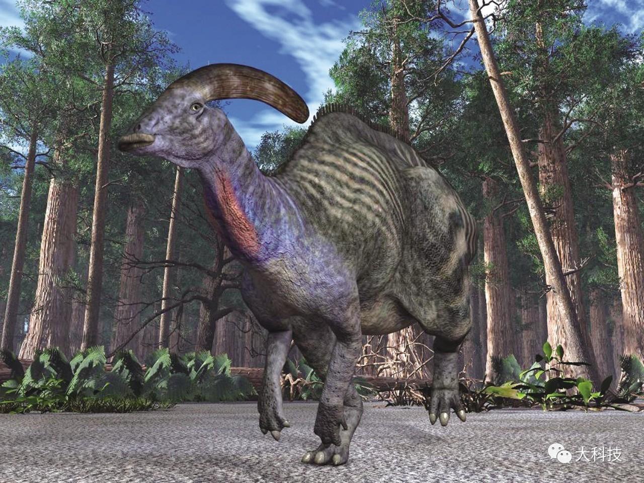 号子手副栉龙 在同时代的恐龙身上,并没有发现鸣管,这就说明当时的恐龙或许不会发出鸟类的鸣叫声。那么,这些庞大的动物又会怎么叫呢? 在电影里,恐龙出场时,总是伴随着咚咚咚巨大的脚步声,一声咆哮让人震颤。1993年的电影《侏罗纪公园》中标志性的霸王龙的叫声是用象和狗的叫声经过处理后合成的。现实生活中,恐龙可不会那样威武。 副栉龙生存于晚白垩纪(约7600万年-7300万年前)的北美洲,它们的嘴巴形状似鸭嘴,是鸭嘴龙家族的一员。然而,更引人注意的是它们头上那个往后方弯曲、修长的冠饰。这个冠饰有什么用呢?