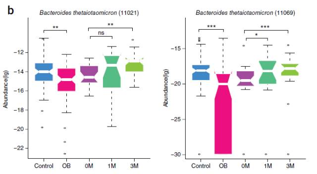 bt无码动物下载_也就是说,bt菌水平的恢复,可能有助于肥胖患者的减重过程.