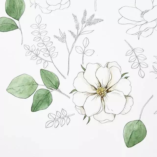 植物手绘文艺简单