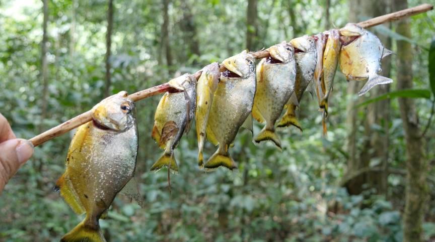 熟女色撸撸色_来亚马逊撸一串现烤食人鱼尝尝鲜