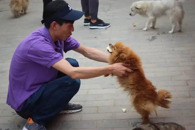 企业社会责任丨关爱流浪小动物