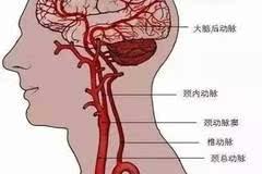 脊髓膜解剖结构图解
