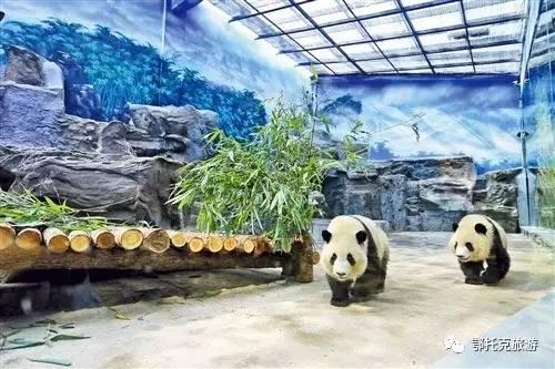 畅游欢乐动物园,畅享最野旅途,尽在鄂尔多斯野生动物园!