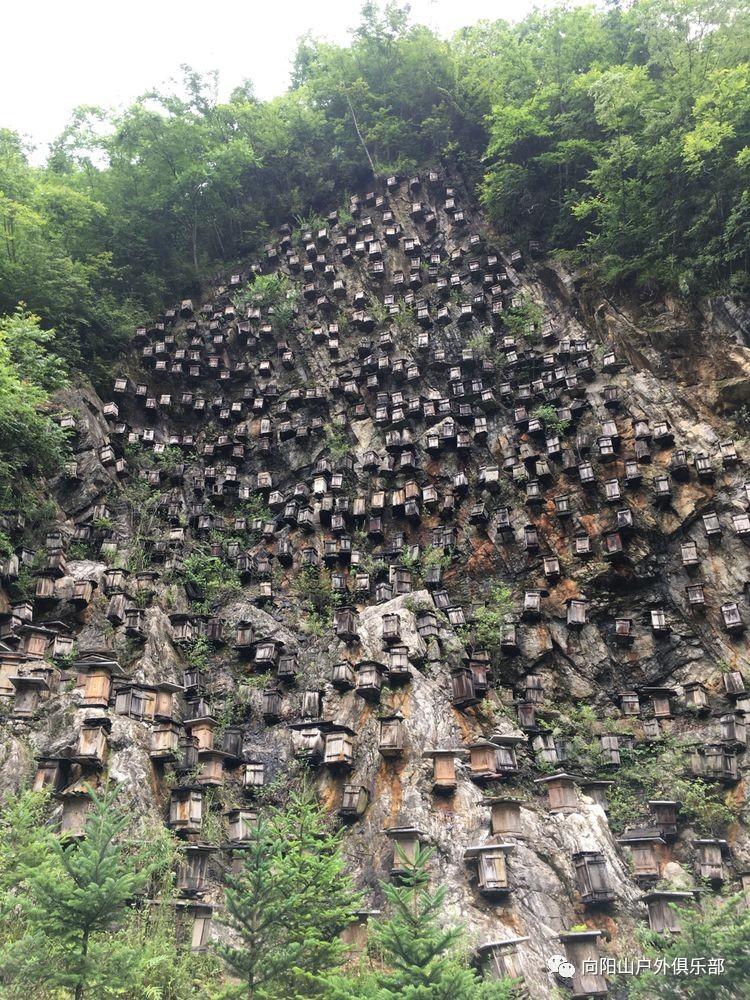 中华小蜗牛,蜂箱的蜜蜂.采蜜时工人需要从蜗牛,崖降下来海崖壁紫螺海崖壁图片