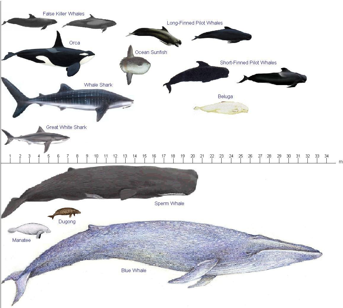 囹�9�%9�._澳洲一年一度的看鲸时节就是现在,最全观鲸指南拿走吧