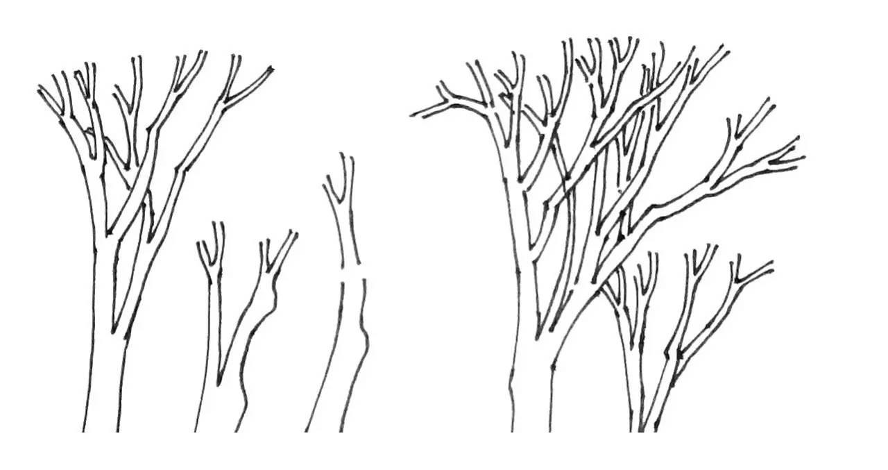一棵树的简笔画,如何画树的简笔图片,幼儿简笔画树的画法,一棵树的图片