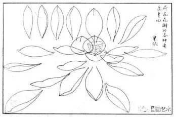 根据荷花花瓣的各种角度透视变化,进行造型推理,从而了解花的结构变化
