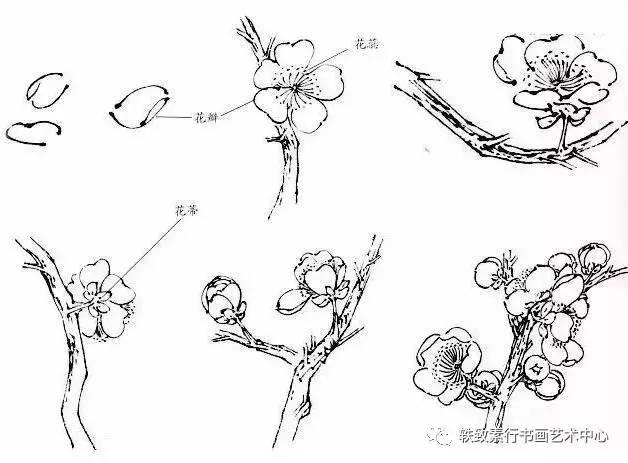 梅花枝干呈灰褐色,多纵驳纹,每节着花一至二朵,花瓣五枚,除常见的