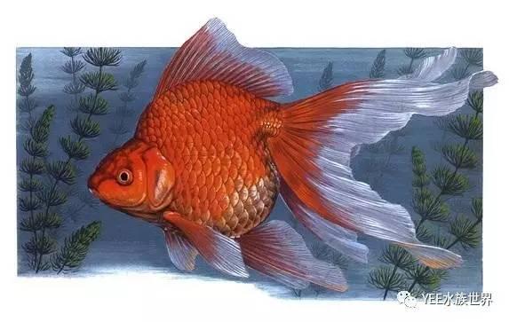鱼儿也需要睡觉,您知道吗?(图6)