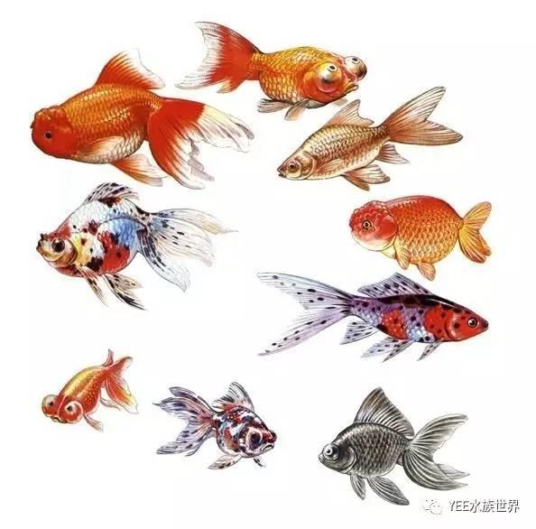 鱼儿也需要睡觉,您知道吗?(图7)