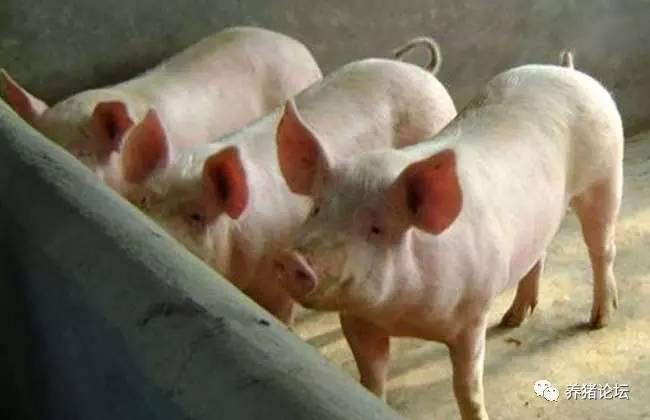 100头母猪养猪场设计图
