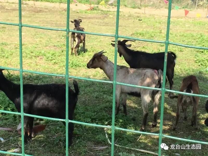 旅游 正文  福州龙台山生态园 位于福州市闽侯县荆溪镇,占地1100余亩