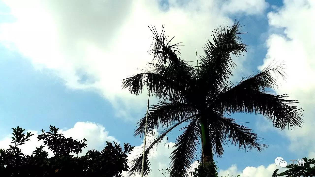 不下雨的时候我就在寺里慢慢溜达,看看罗浮山的椰树和蓝天白云,或者跟