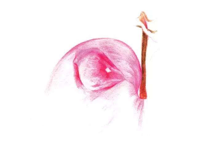 彩铅荷包牡丹的画法