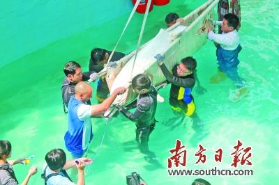 走近广东海豚护卫队 听听他们的温情经历