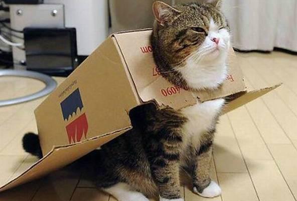 别怪猫咪抓沙发!4个「野性dna」证明你养的是小老虎