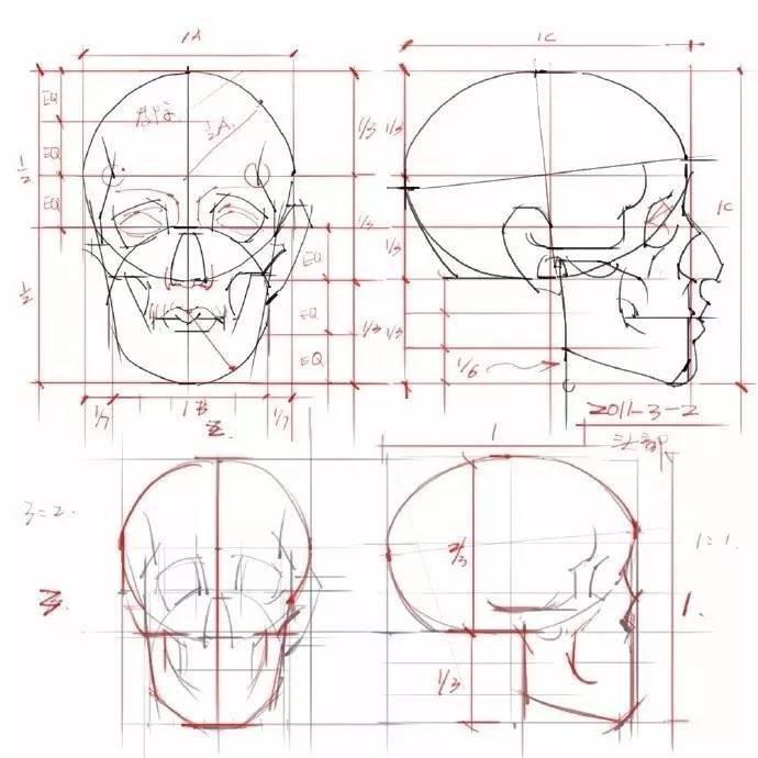 手绘素材 | 有关人物头部的结构知识,掌握它!
