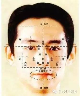 若男性嘴唇上周有痣,痦子,而肾反射区域也不好,说明此人生殖系统有图片