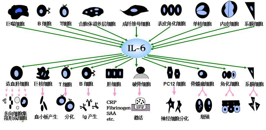 你用鸡巴打��il�.��!.9d%_那么il-6的增高是否一定意味着细菌感染呢?