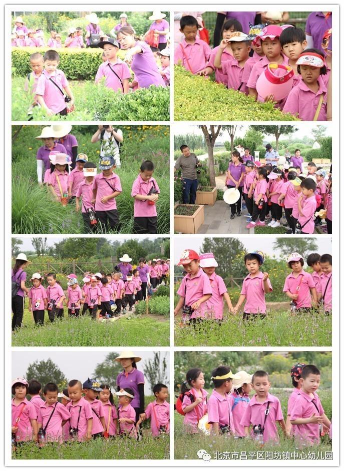 阳坊镇中心幼儿园和教工幼儿园手拉手游花圃活动图片