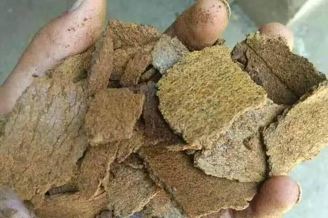 芒果树及木本作物豆饼肥的十大优势