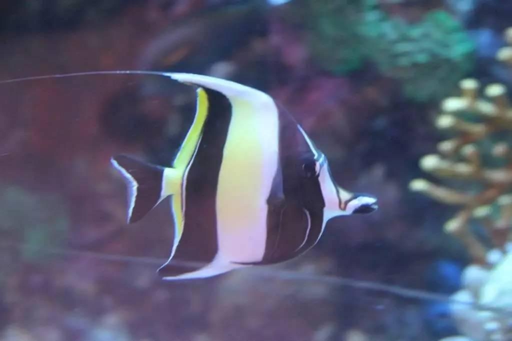 热带小鱼diy手工制作教程