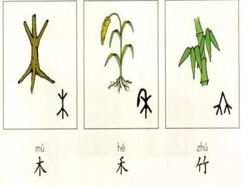 象形字-幼儿 自然母语课 一场与自然万物的约会