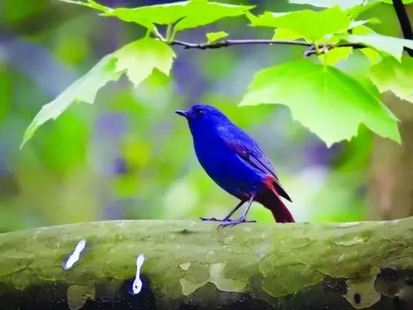 旅游 正文  尧人山国家森林公园是野生动物的乐园,有37类稀罕野生动物