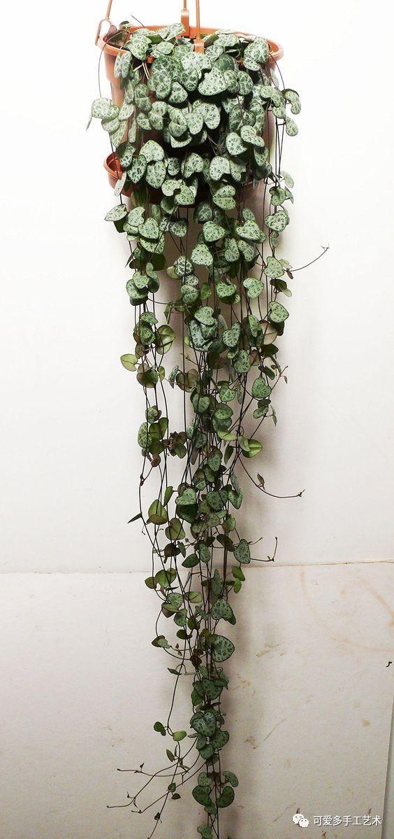 仿真 仿真花 仿真植物 盆景 盆栽 植物 装饰 564_1199 竖版 竖屏