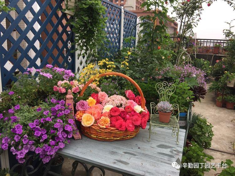 水桶,好像当初种花的时候,一桶 满楼顶的花,全是我一个人的汗水