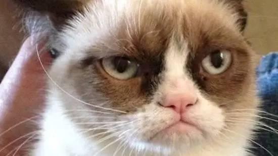 忧郁橘猫表情包图片