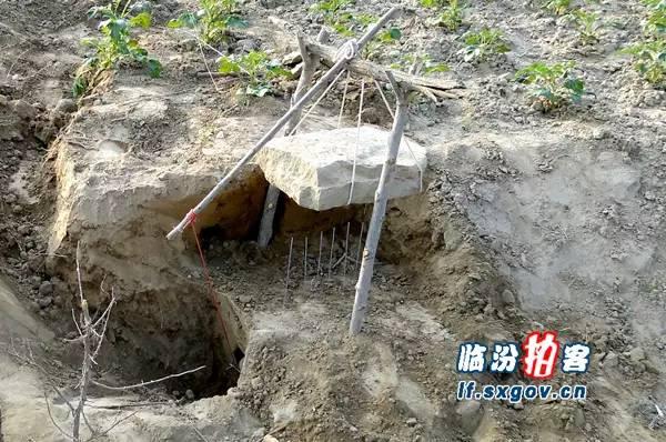 美食 正文  田鼠善于挖掘地洞,通常洞穴都会有两个以上的入口,以策