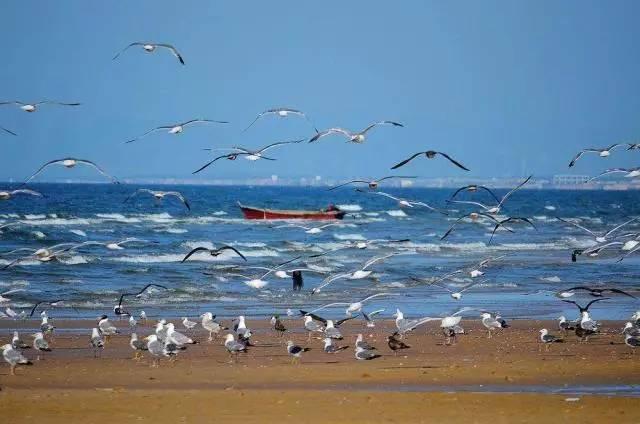 养马岛,月亮湾休闲纯玩2日游 行程特色 1,清澈见底,没有浒苔的海水