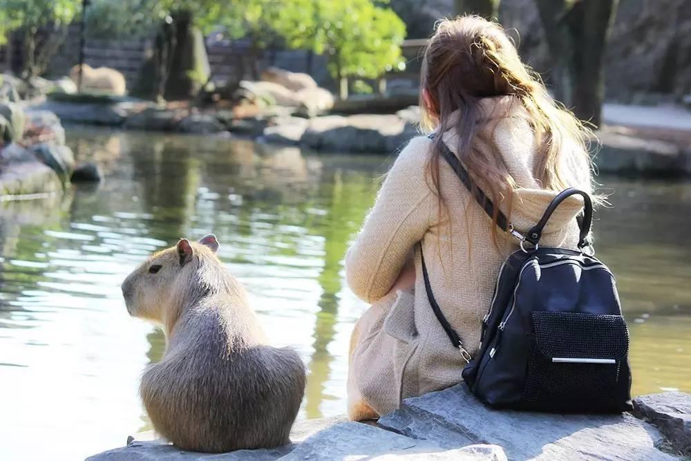 旅游 正文  长崎野生动物园是可以触摸动物的动植物园.