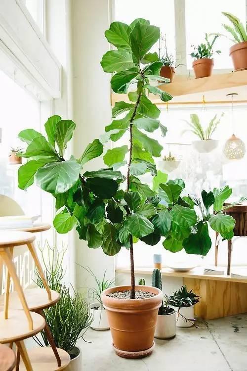 家装最划算的投入 绿色植物一定需要!