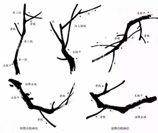 文化 正文  梅花的结构包括花瓣,花蕊,花蒂等,学画梅花,宜先写生,对