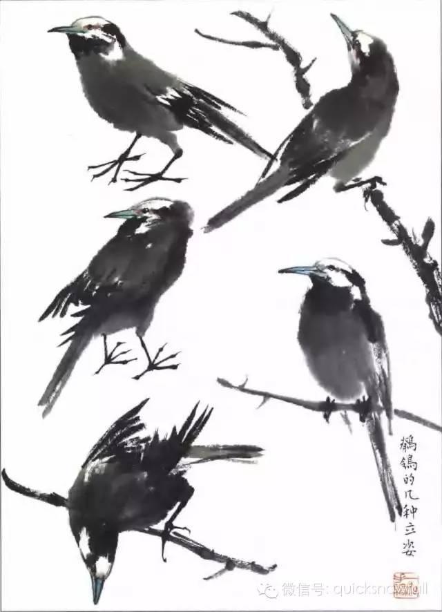 壁纸 动物 国画 鸟 鸟类 雀 640_886 竖版 竖屏 手机