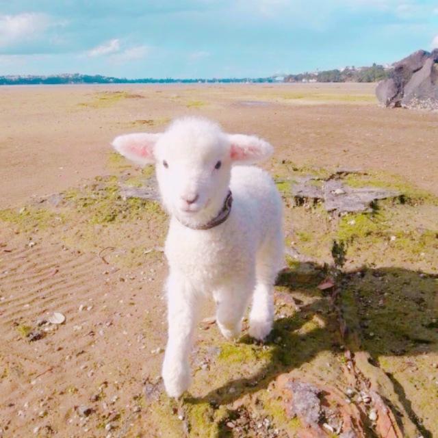 大波射_我愿做主最温顺的小羊(一大波萌羊来袭~)