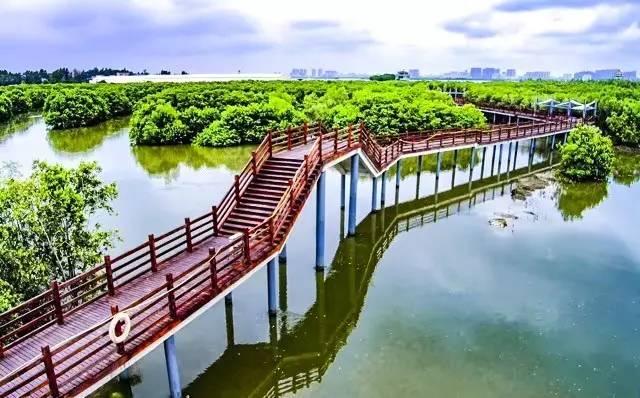 建设内容包括:入口区,科教服务区,红树林观赏区,池塘湿地浏览区等.图片