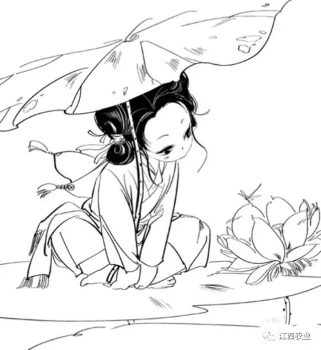 少数民族采莲女手绘