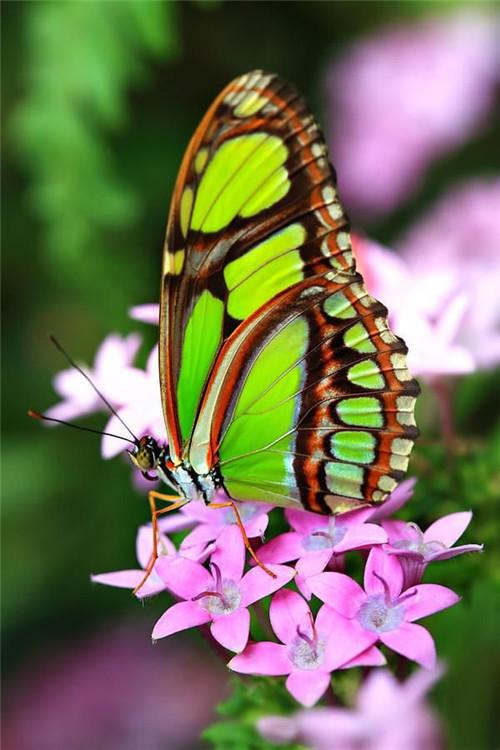 萨克斯《两只蝴蝶》,世界蝴蝶大全,太齐了太漂亮了!