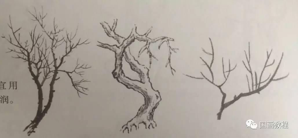 树梢,树结和树根的画法