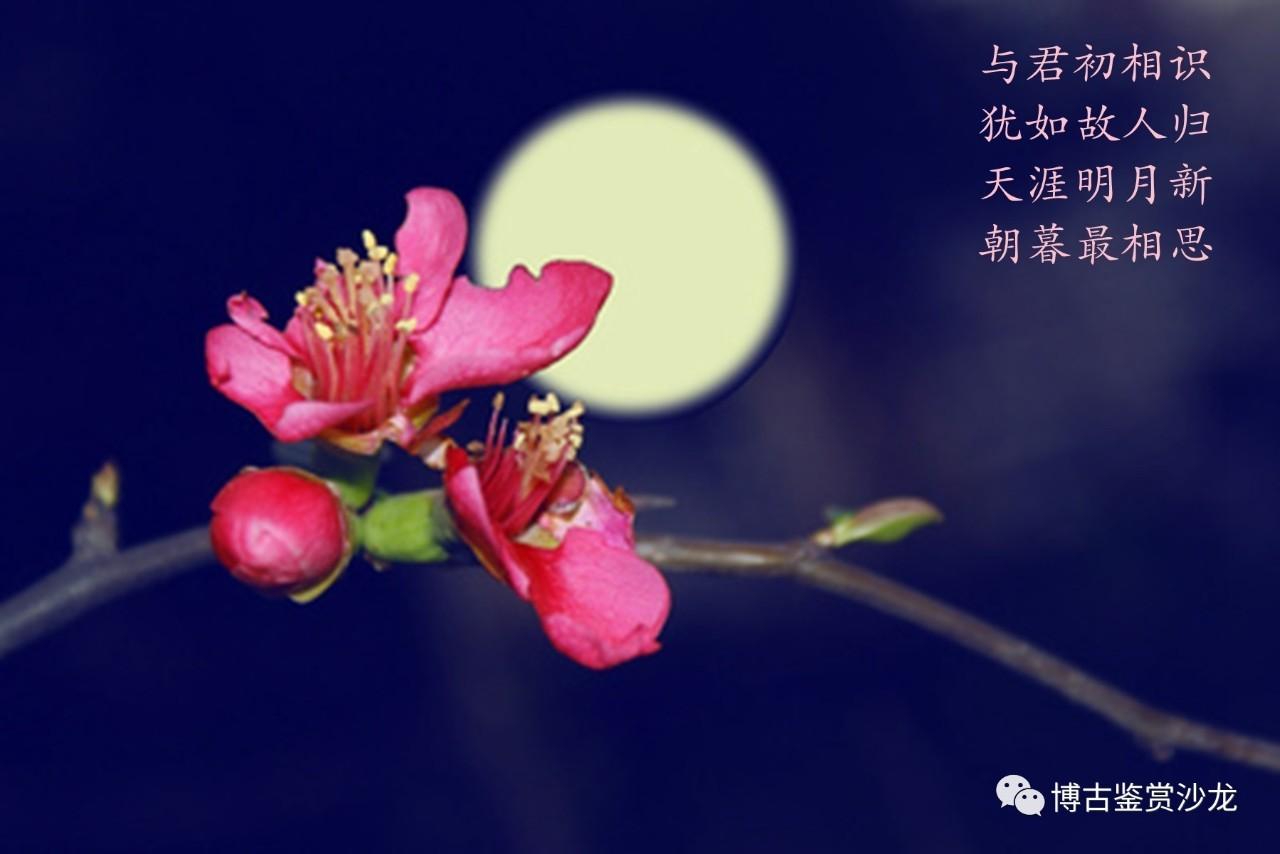 米珠玫瑰花步骤图解