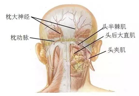 枕大神经-针刀治疗偏头痛效果绝佳