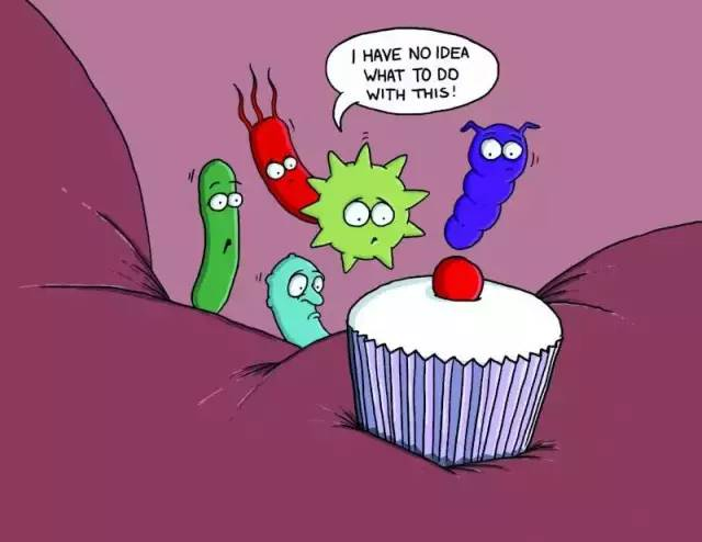 肠道菌群平衡,是保持健康的关键!