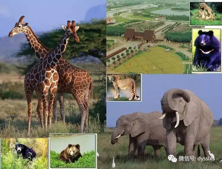 上海迪士尼 A迪士尼小镇 B线野生动物园 二日游880元 人起 每周四 六发班
